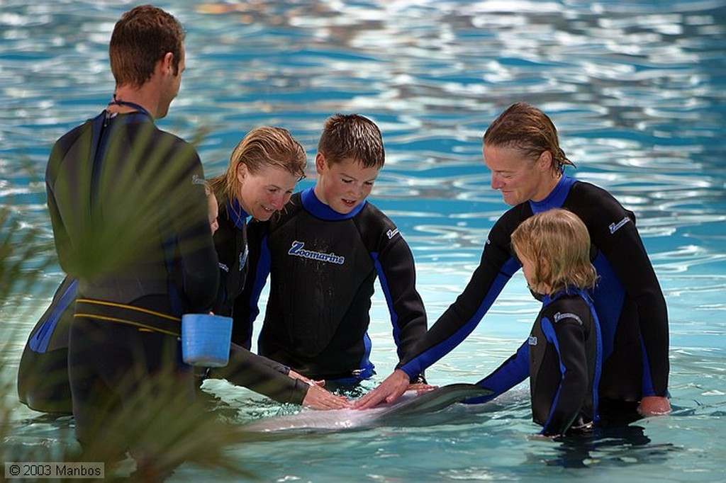 Zoomarine Show en el delfinario Arade