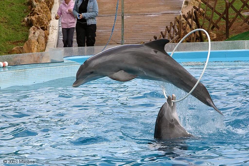 Zoomarine El baile de los delfines Arade