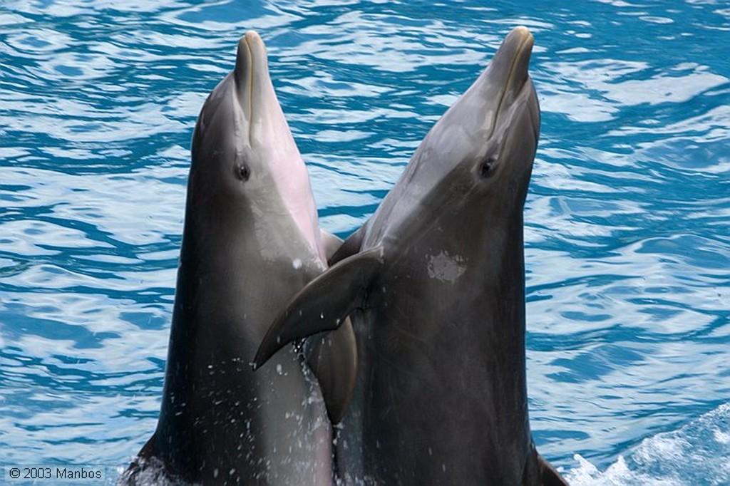 Zoomarine Transporte acuático por delfín Arade