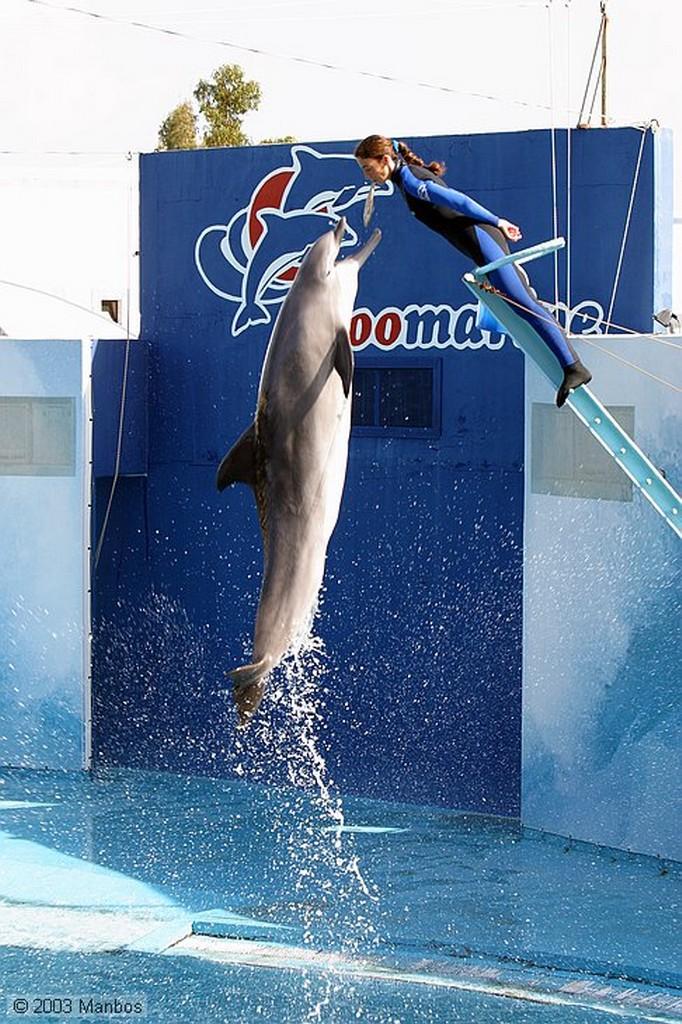 Zoomarine Cabalgando a los delfines Arade