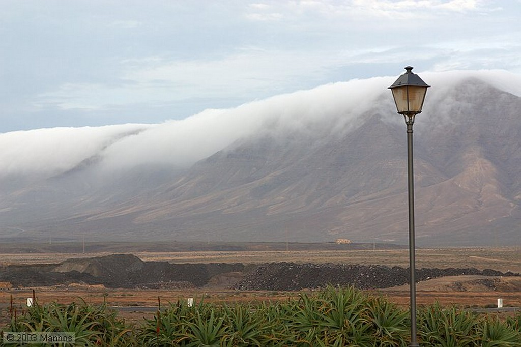 Lanzarote Flora de Lanzarote Canarias