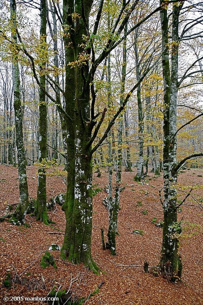 Sierra de Urbasa Bosque de hayas Navarra