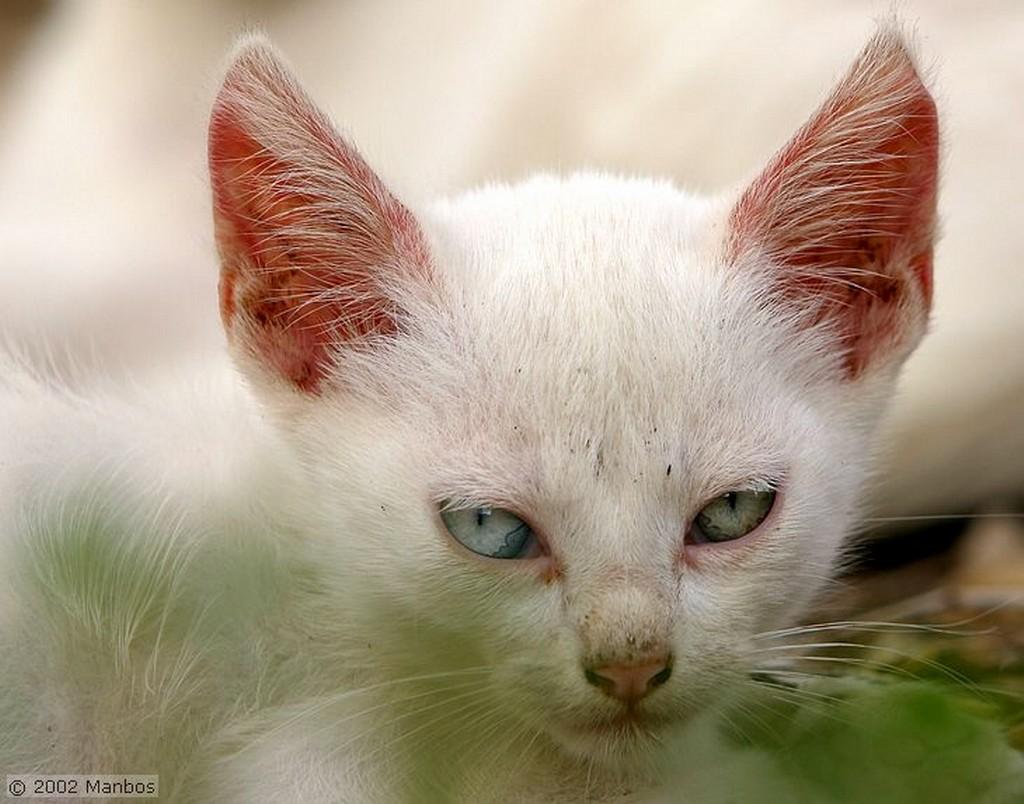 El Brosquil Los ojos de gato Valencia