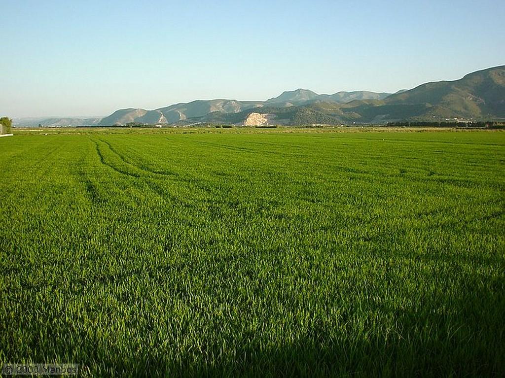 El Brosquil Paseo por los arrozales Valencia