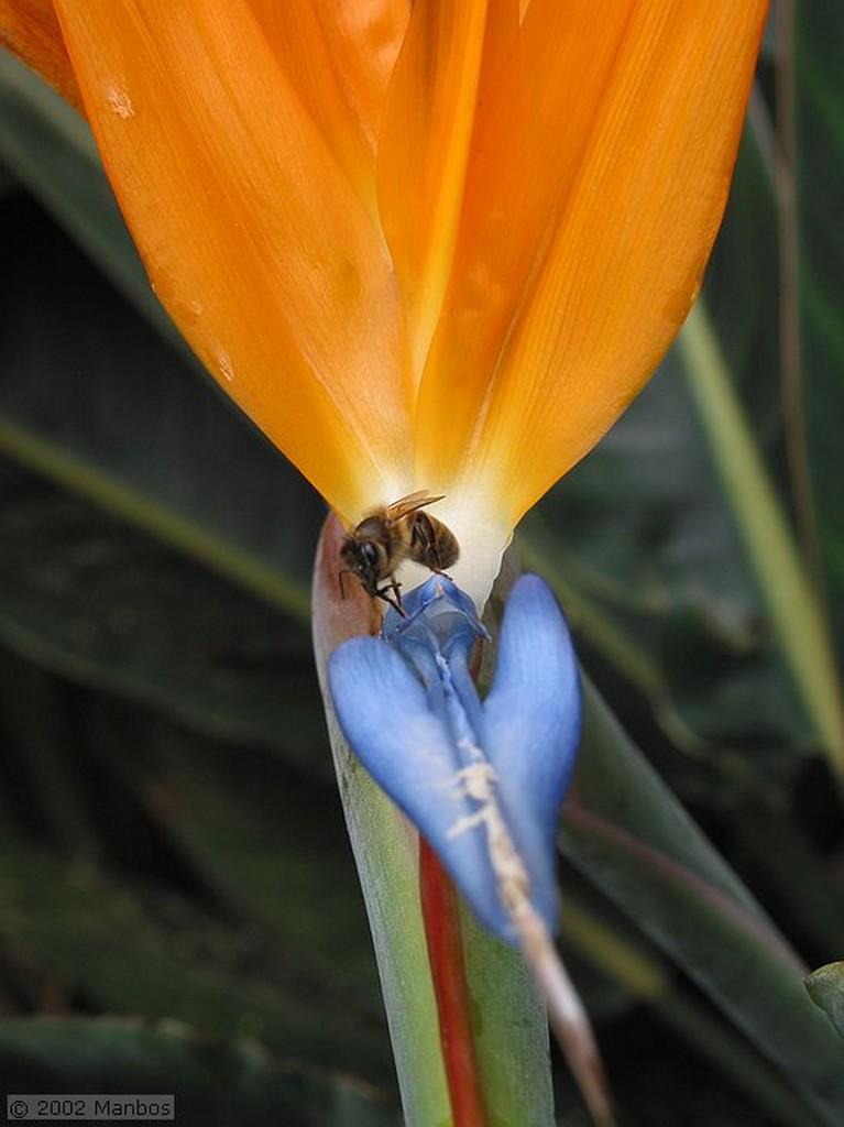 Tenerife Jardin Botanico Puerto de la Cruz Canarias
