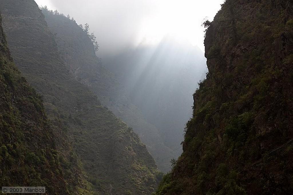 Tenerife Margaritas endémicas de Tenerife Canarias