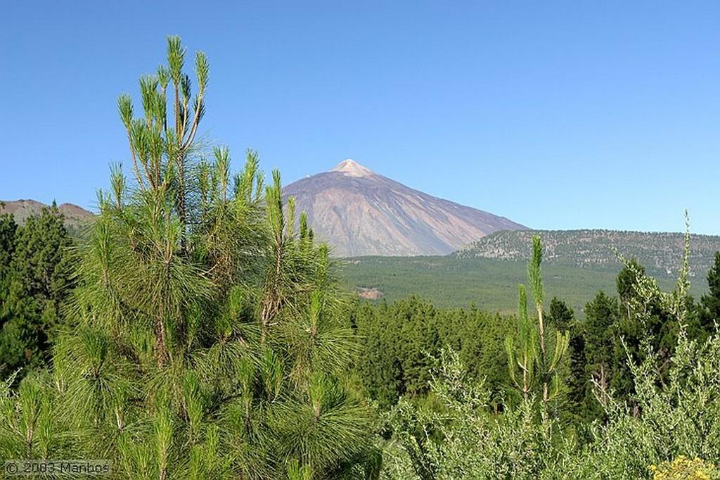 Tenerife Retama del Teide Canarias