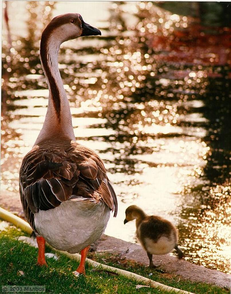 Zoo de Madrid Patos2 Madrid