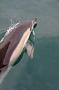 Avistamiento de delfines, Gibraltar, Reino Unido