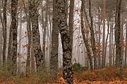 Sierra de Francia, Sierra de Francia, España