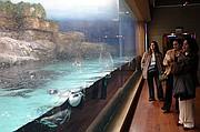 Oceanografic, Ciudad de las Artes y las Ciencias, España