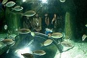 Foto de Ciudad de las Artes y las Ciencias, Oceanografic, España - Sirenas en La Rompiente