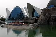 Foto de Ciudad de las Artes y las Ciencias, Oceanografic, España - Flamencos