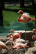 Zoo de Madrid, Zoo de Madrid, España