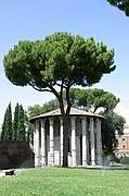 Foto de Roma, Piazza della Bocca della Verita, Italia - Templo del Forum Boarium