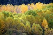 Parque Natural del Rio Lobos, Parque Natural del Rio Lobos, España