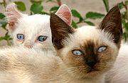 Gatos Callejeros, El Brosquil, España