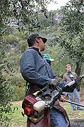 Recogida de la Aceituna, Priego de Cordoba, España
