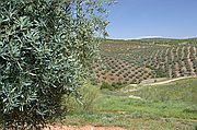 Comarca del Condado, Cañadas de El Condado, España