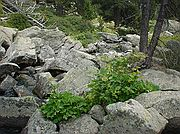 Pirineos, Pirineos, España