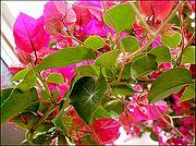 Camera Sony Cybershot F55 El Brosquil EL BROSQUIL Photo: 198