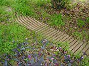 Camera Sony Cybershot F55 Jardín Casa de los Soles El Brosquil EL BROSQUIL Photo: 199