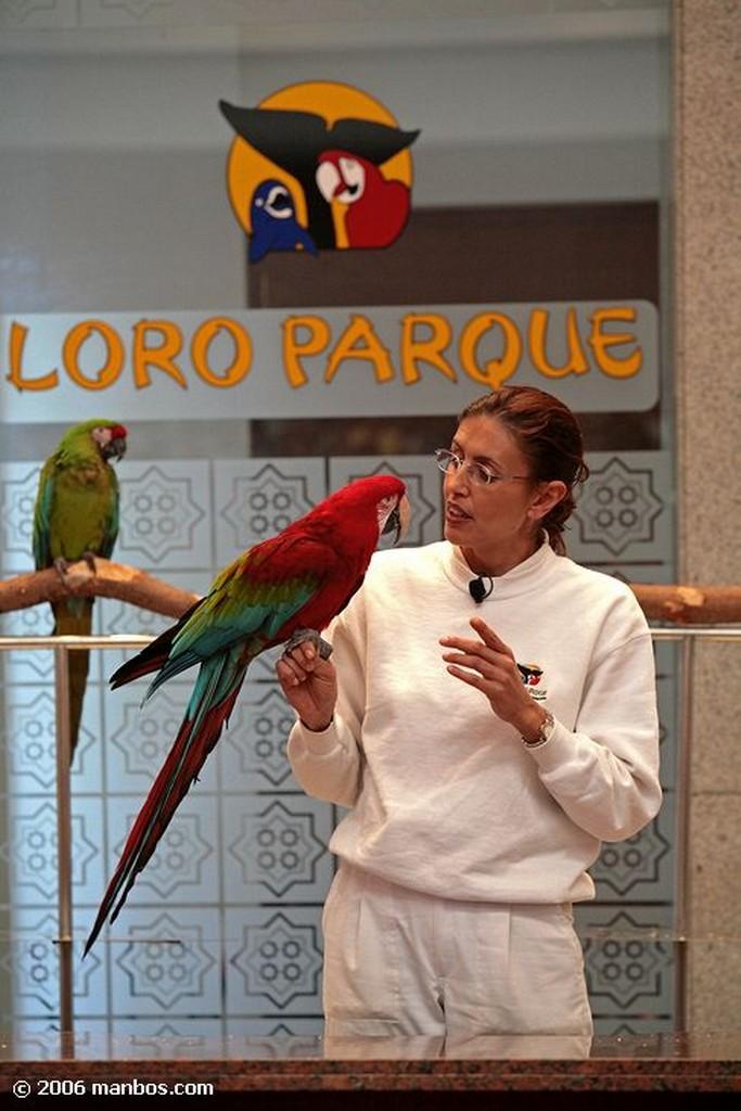 Tenerife Loro show Canarias