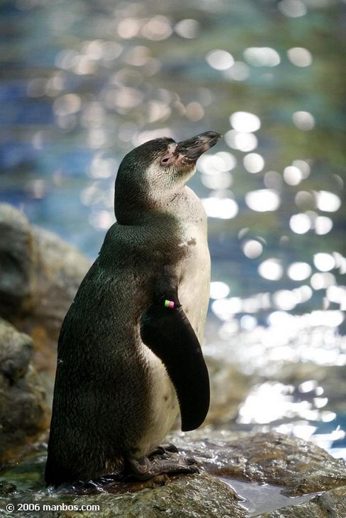 Tenerife Pinguino Canarias