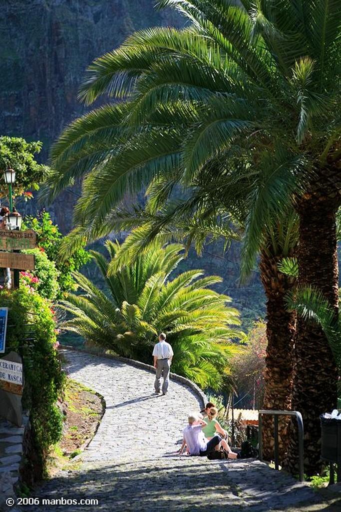 Tenerife Gatito Canarias