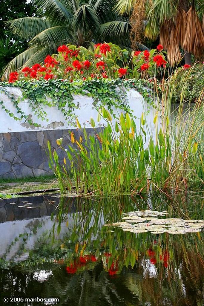 Tenerife Flora del Jardin Botanico Canarias