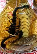 Foto de Rio Mekong, Vietnam - Serpiente comiendo un escorpion
