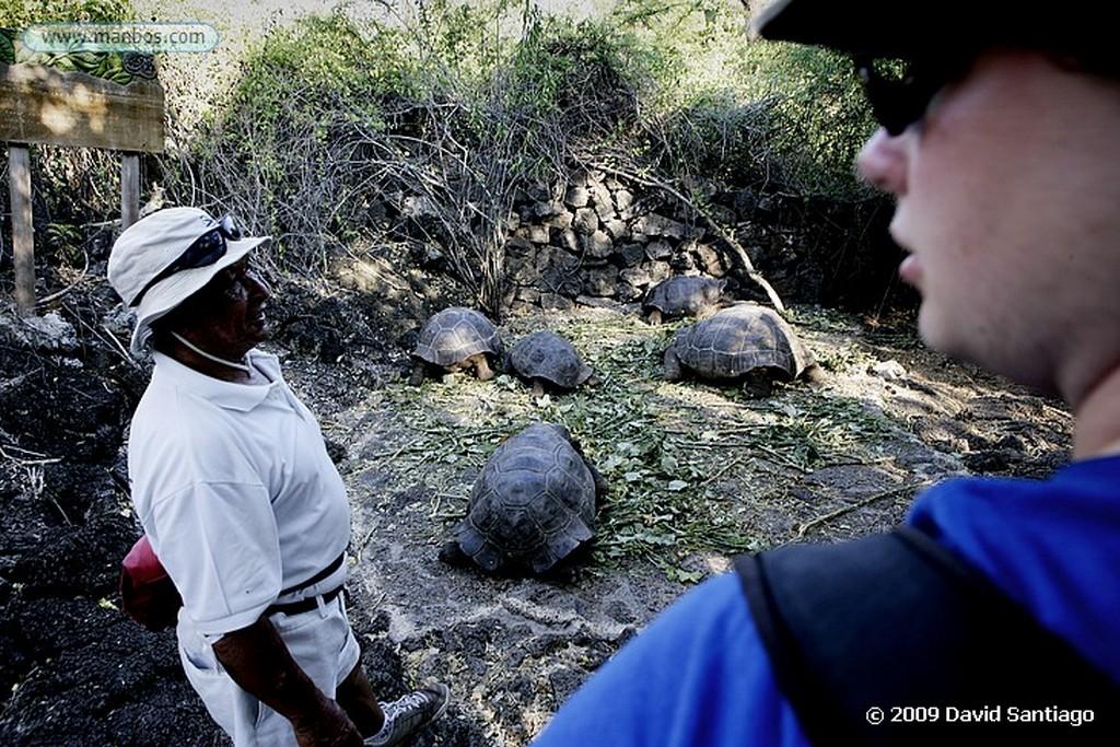 Islas Galapagos Tortuga gigante Geochelone elephantopus Estación biologica Charles Darwin Santa Cruz Galápagos Islas Galapagos