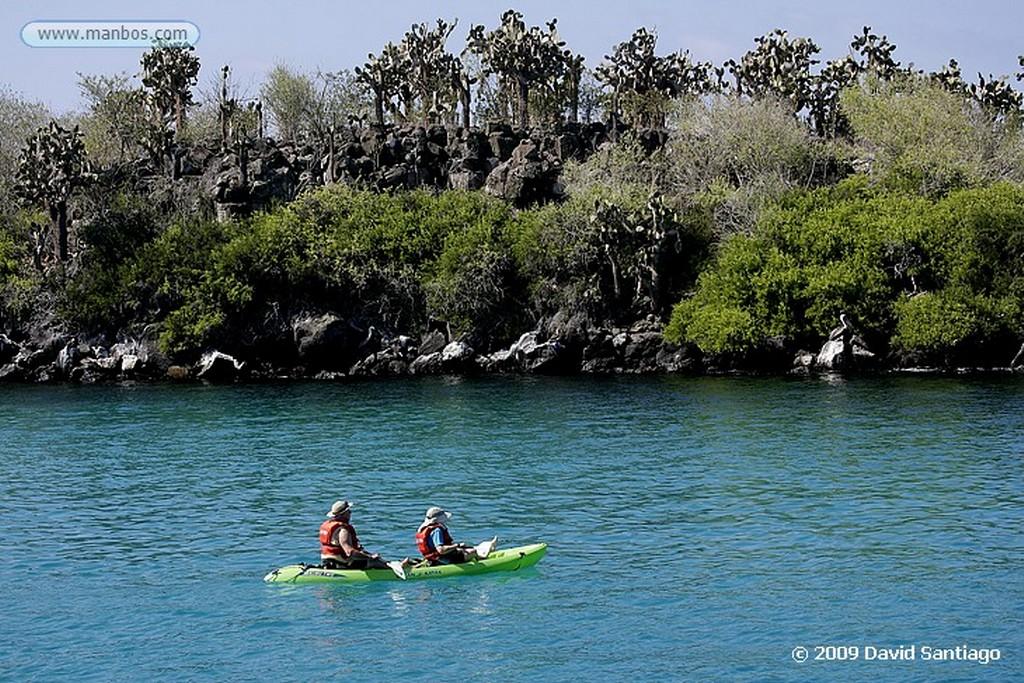 Islas Galapagos Lobo marino Zalophus californianus wollebacki Bahia Gardner Santa Cruz Galápagos Islas Galapagos