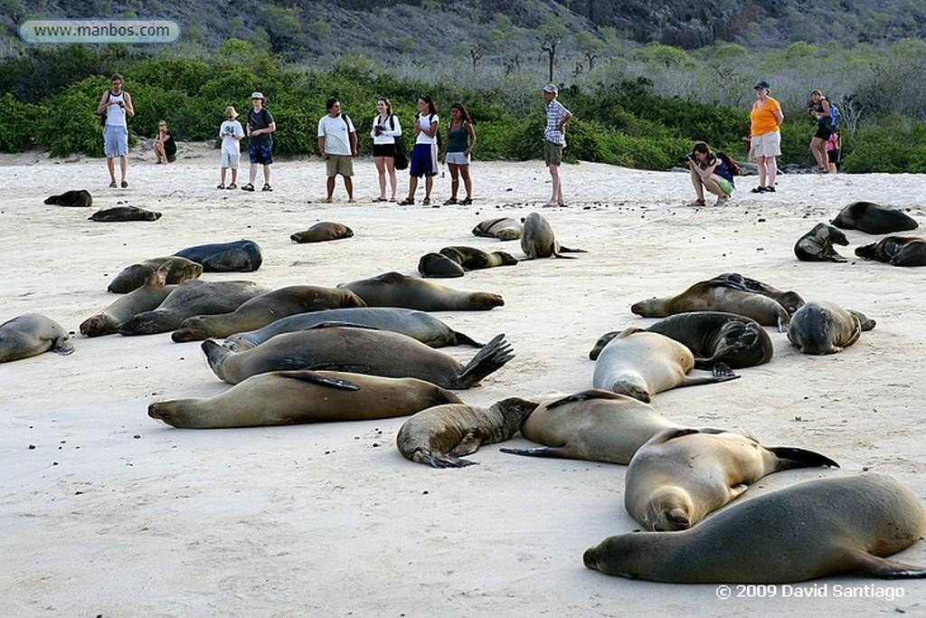 Islas Galapagos Lobo marino Zalophus californianus wollebacki Santa Fe Galápagos Islas Galapagos