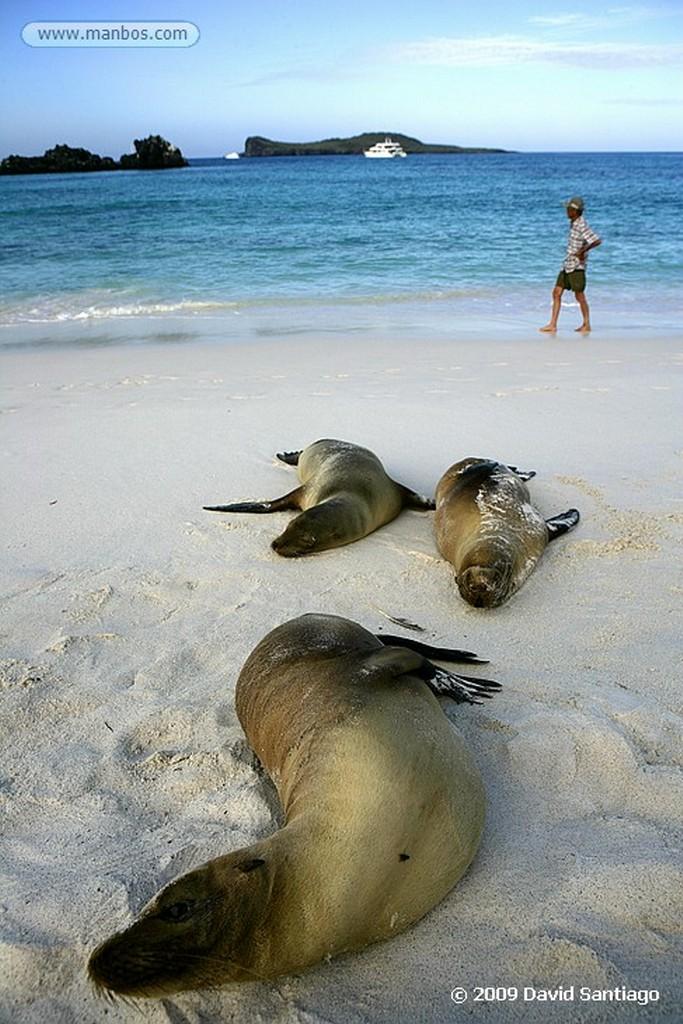 Islas Galapagos Lobo marino Zalophus californianus wollebacki Floreana Galápagos Islas Galapagos