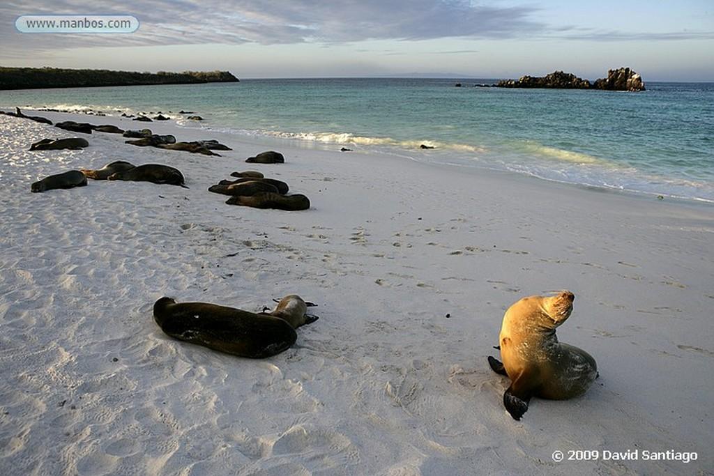 Islas Galapagos Pelicano Pelecanus occidentalis Bahia Gardner Isla Española Galápagos Islas Galapagos
