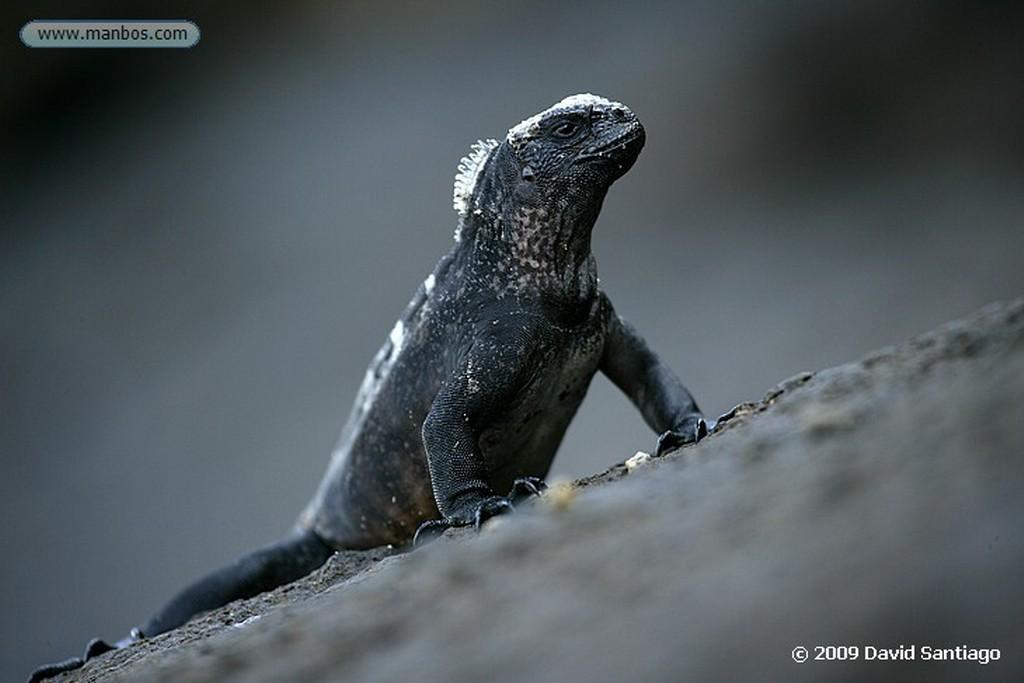 Islas Galapagos Cangrejo Zayapa Floreana Islas Galapagos