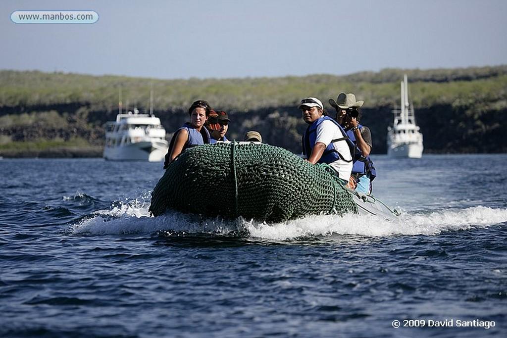 Islas Galapagos Cangrejo Zayapa Isla Bachas Galapagos Islas Galapagos