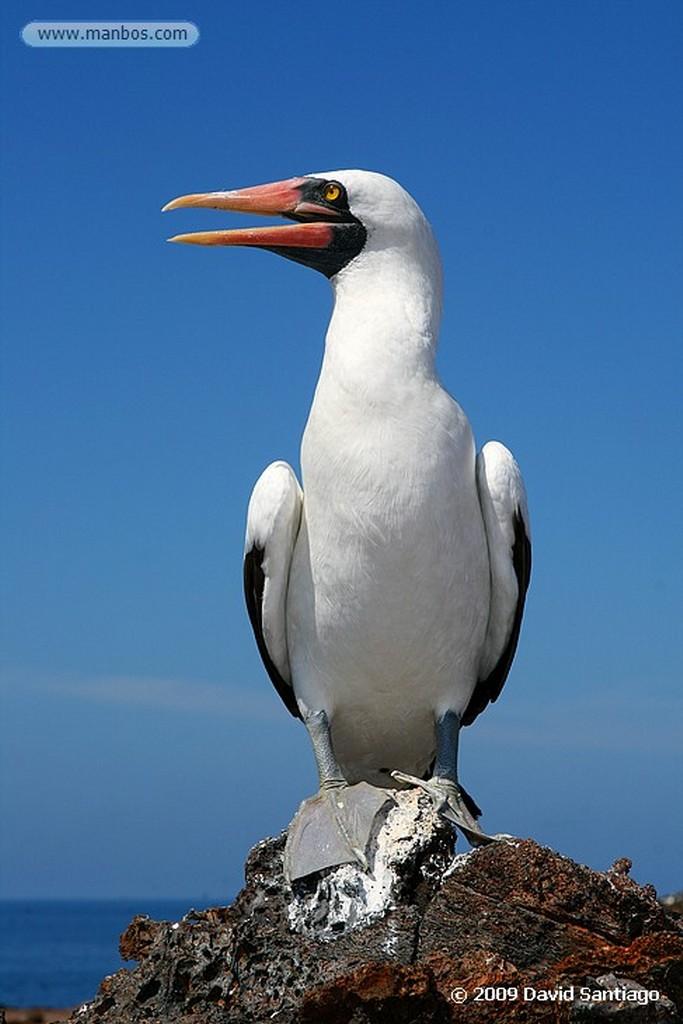 Islas Galapagos Isla Genovesa Galápagos Islas Galapagos