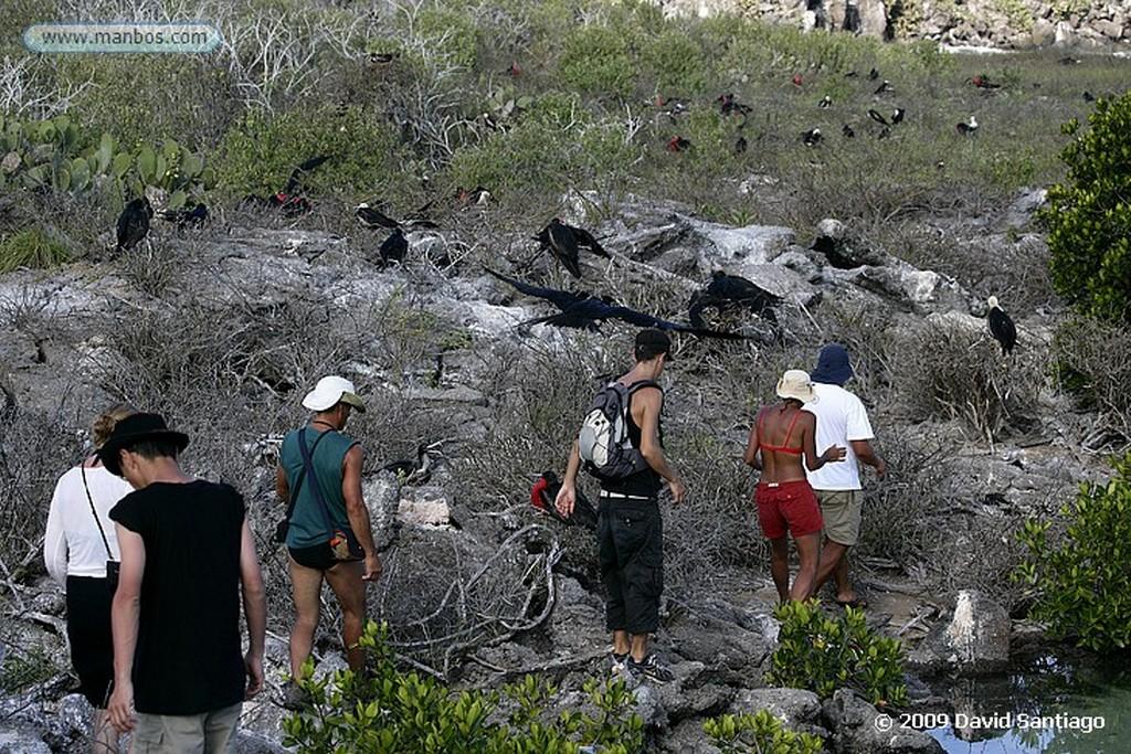 Islas Galapagos Gaviota Larus forficatus Isla Genovesa Galápagos Islas Galapagos