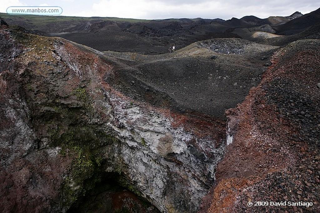 Islas Galapagos Candelabra cactus Volcan Sierra Negra Isabela Galápagosgos Islas Galapagos