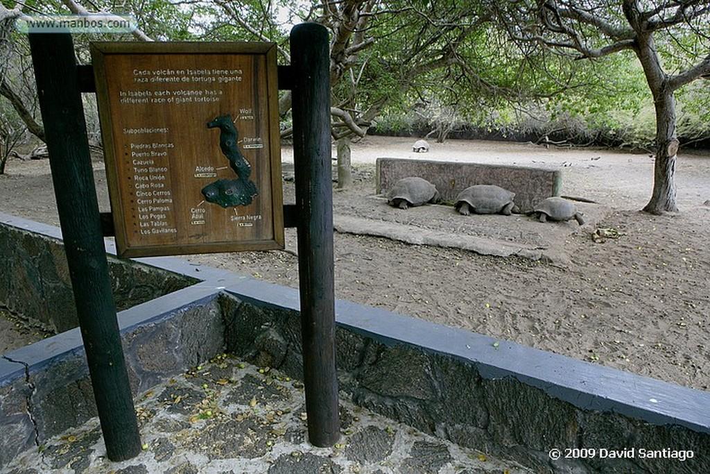 Islas Galapagos Muro de las Lamentaciones Isabela Galápagos Islas Galapagos