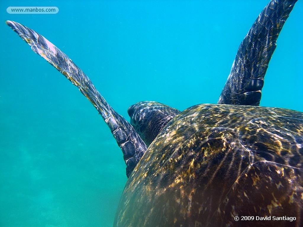 Islas Galapagos Lobo marino Zalaphus californianus wollebacki Isla San Cristobal Galápagos Islas Galapagos