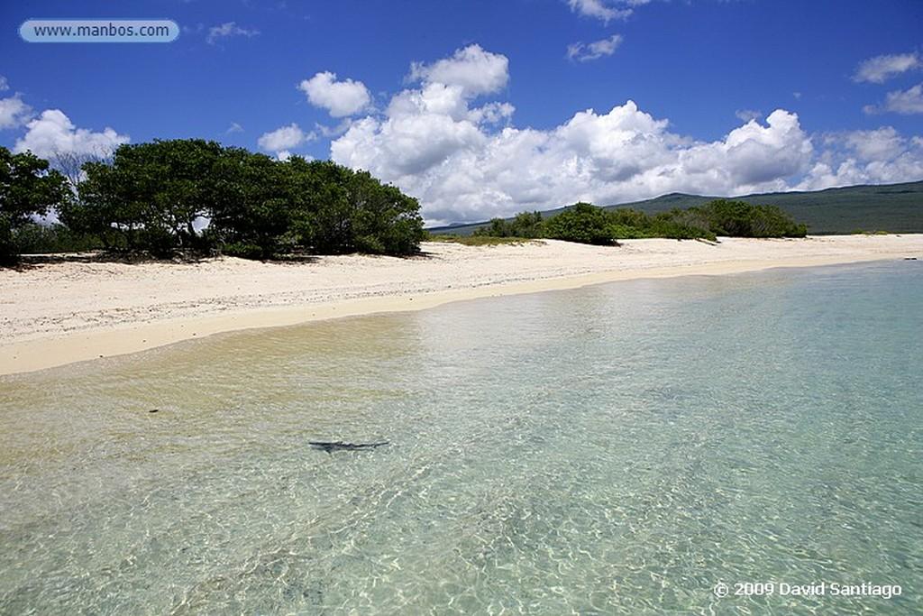 Islas Galapagos Tortuga verde Chelonia mydas Floreana Galápagos Islas Galapagos