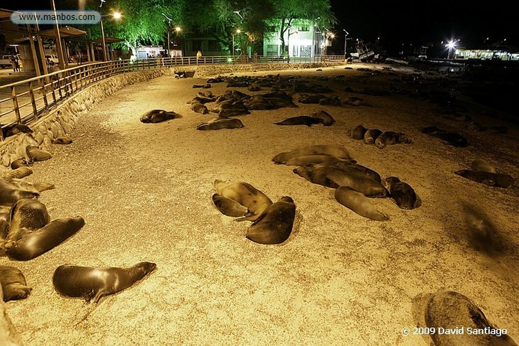 Islas Galapagos San Cristobal Galápagos Islas Galapagos