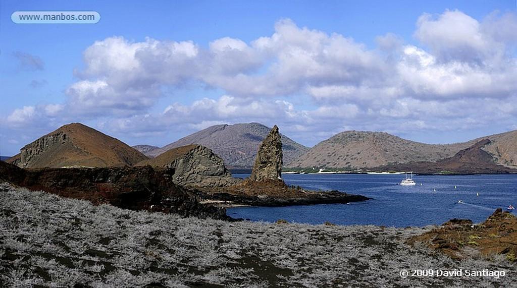 Islas Galapagos Arboles de palo santo Floreana Islas Galapagos
