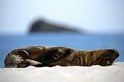 Islas Galapagos, Islas Galapagos, Ecuador