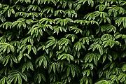 Foto de Bali, Indonesia - Detalle vegetación Bali