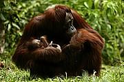 Borneo, Borneo, Indonesia