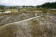 Lemo, Sulawesi, Indonesia